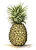 Pineapple- symbol for welcome