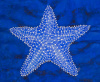 Sea Star Blue