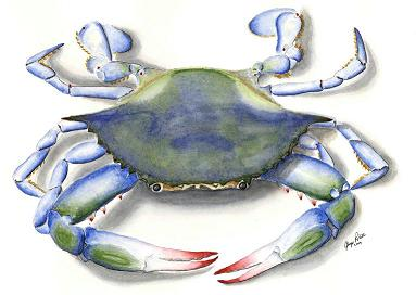 Blue Crab- very popular